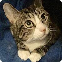 Adopt A Pet :: Tipsy - Long Beach, NY