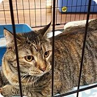 Adopt A Pet :: Azalea - Lutherville, MD