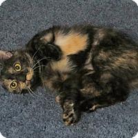 Adopt A Pet :: Bobbie Sue-ADOPTED - Somerset, KY