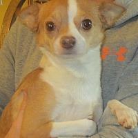 Adopt A Pet :: Margaret - Westport, CT
