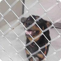 Adopt A Pet :: A048545 - Temple, TX