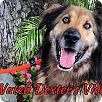 Adopt A Pet :: Dexter - Canoga Park, CA