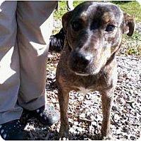 Adopt A Pet :: Hank - Seattle, WA