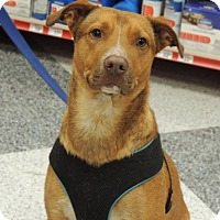 Adopt A Pet :: Michael - Humble, TX