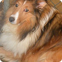 Adopt A Pet :: Trina - Prole, IA