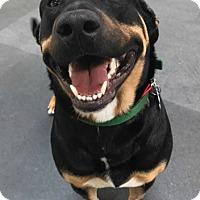 Adopt A Pet :: VALENTINA - Los Angeles, CA
