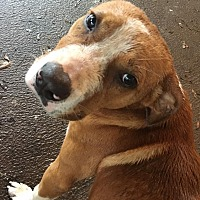 Adopt A Pet :: Max - Blakely, GA