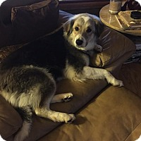 Adopt A Pet :: Ginny - Franklin, IN