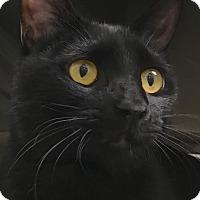 Adopt A Pet :: Midnite - Buhl, ID