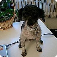Adopt A Pet :: Oreo - Hamilton, ON