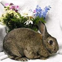 Adopt A Pet :: Bubbles - Roseville, CA