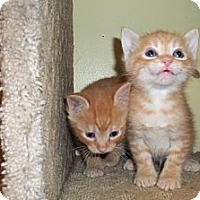 Adopt A Pet :: Chester and Harley - Acme, PA