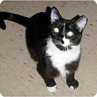 Adopt A Pet :: Penny - Hamilton, ON