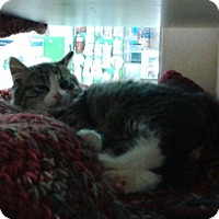 Adopt A Pet :: Dutchess - East Meadow, NY