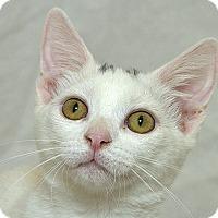 Adopt A Pet :: Scarlett V - Sacramento, CA