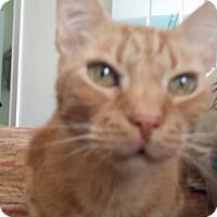 Adopt A Pet :: Oliver Rhett - Summerville, SC