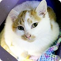 Adopt A Pet :: Eli - Medina, OH