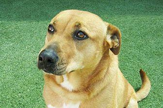 Shepherd (Unknown Type) Mix Dog for adoption in Midway City, California - Dutchess