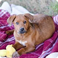Adopt A Pet :: Roland $250 - Seneca, SC