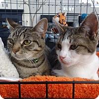 Adopt A Pet :: Joey and Sophie - Berkeley, CA
