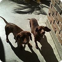 Adopt A Pet :: Dash - New Roads, LA