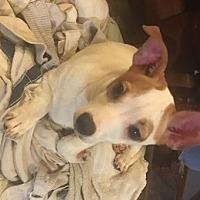 Adopt A Pet :: Sweet Pea - Cameron, NC