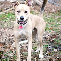 Adopt A Pet :: C.D. - Virginia Beach, VA