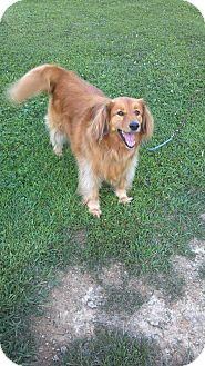 Retriever (Unknown Type) Mix Dog for adoption in Morgantown, West Virginia - Daisy