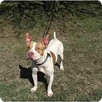 Adopt A Pet :: Cabo - Chicago, IL