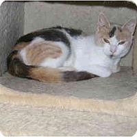 Adopt A Pet :: Abby - Etobicoke, ON