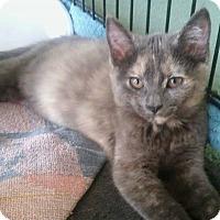 Adopt A Pet :: Ella - Olmsted Falls, OH