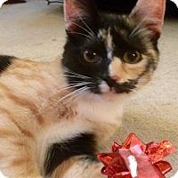 Adopt A Pet :: Iris - Audubon, NJ