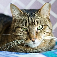 Adopt A Pet :: Amalphia - Freeport, NY