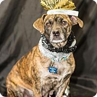 Adopt A Pet :: Casey - New City, NY