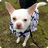 Adopt A Pet :: Mikey - Salem, OR