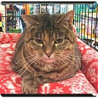 Adopt A Pet :: SELMA - Fenton, MO