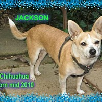 Adopt A Pet :: Jackson - Huddleston, VA