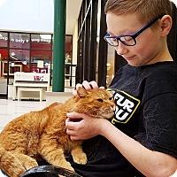 Adopt A Pet :: Autis - Elyria, OH