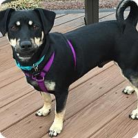 Adopt A Pet :: Hunter Boy - New Oxford, PA