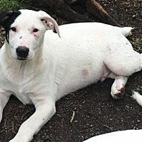 Adopt A Pet :: Lathan- DEAF - Hagerstown, MD