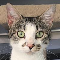 Adopt A Pet :: Mercedes - Winchester, CA