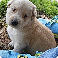 Adopt A Pet :: TITUS - Torrance, CA