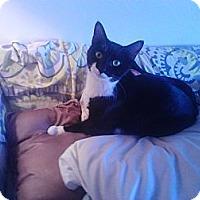 Adopt A Pet :: Nemo - Brooklyn, NY