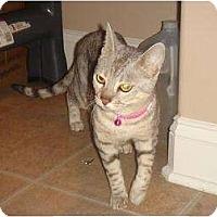 Adopt A Pet :: Tessa - Lantana, FL