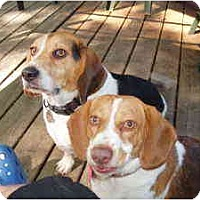 Adopt A Pet :: Rocky and Dora - Indianapolis, IN