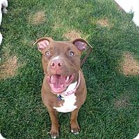 Adopt A Pet :: Georgia Peach - La Habra, CA