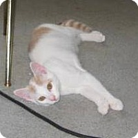 Adopt A Pet :: Nugget - Kirkwood, DE