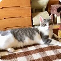 Adopt A Pet :: Larry - Adoption Pending! - Colmar, PA