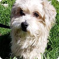 Adopt A Pet :: Dora - Los Angeles, CA