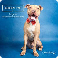 Adopt A Pet :: Logan - Mount Laurel, NJ